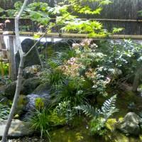 雑木の庭、苔庭