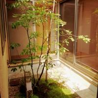 坪庭、雑木の庭