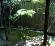 モミジのシンプルな坪庭、苔庭