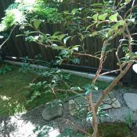 カンツバキ越しに庭を眺める